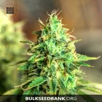 Bulk Seed Bank Auto Sweet Tooth 17,5.-€-tól