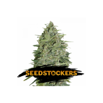 Seedstockers Super Skunk Autoflower 25 db