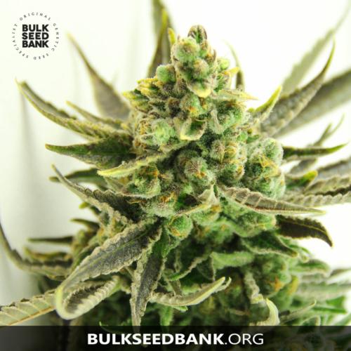 Bulk Seed Bank CRITICAL 5 db