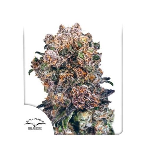 Dutch Passion Seed Company Blueberry  Reguar 10 db