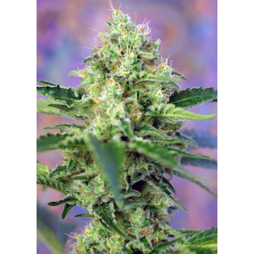 Sweet Seeds Crystal Candy 3 db